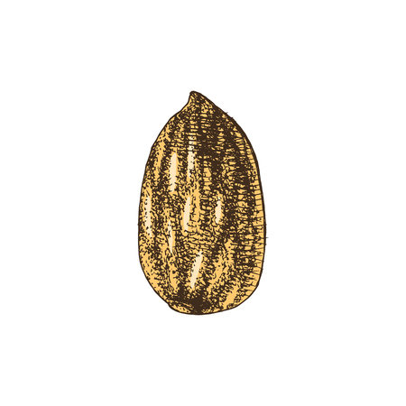 Hand drawn almond