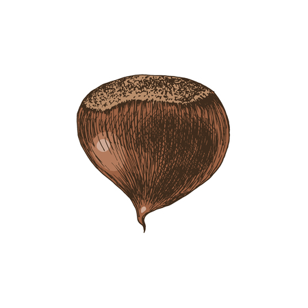 Hand drawn chestnut Çizim