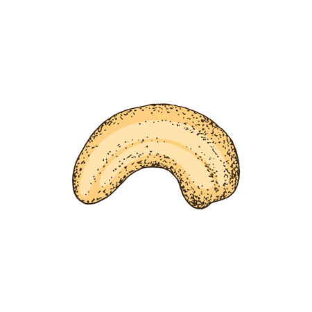 Hand drawn colorful cashew nut isolated on white background. Vector illustration