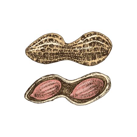 Hand drawn peanuts Stock Vector - 123302754