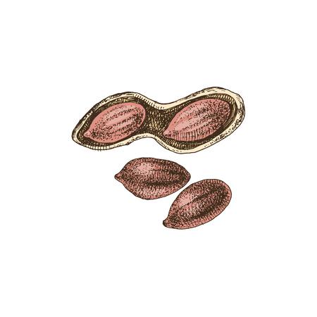 Hand drawn peanuts Stock Vector - 123302767