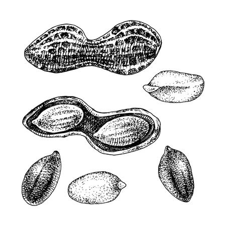 Hand drawn peanut set Stock Vector - 123302770