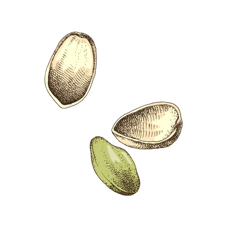 Hand drawn illustration of pistachio nuts falling