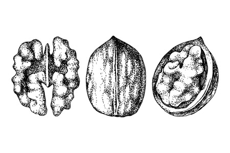 3 hand drawn walnut nuts isolated on white background. Vector illustration