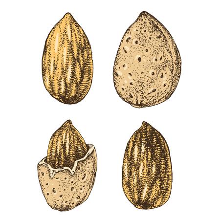 Hand drawn almonds