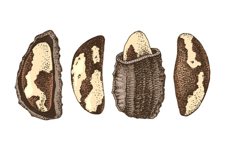 Set of 4 hand drawn colorful brazil nuts.