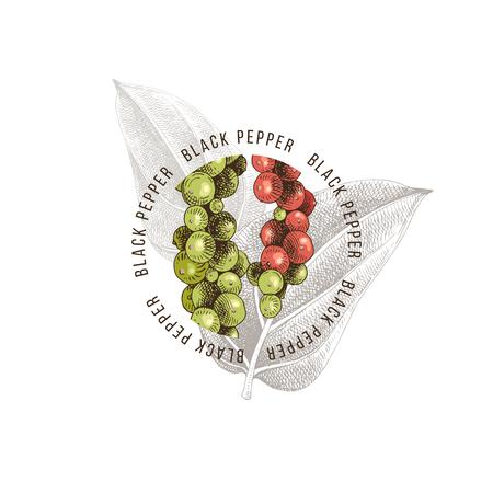 Black pepper emblem over hand drawn pepper plant Illustration