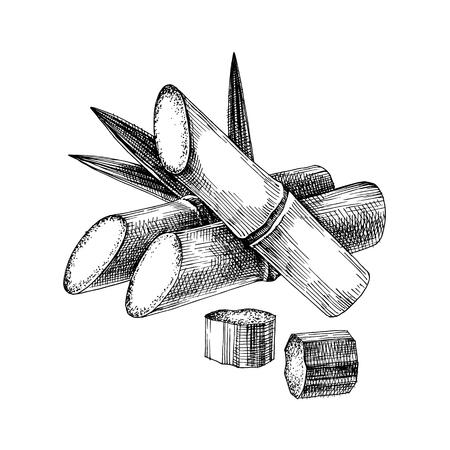 Canne à sucre dessinée à la main