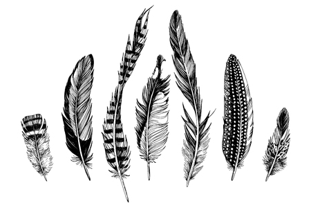 7 hand drawn feathers on white