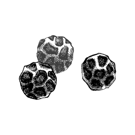 Hand drawn black pepper isolated on white background. Vector illustration