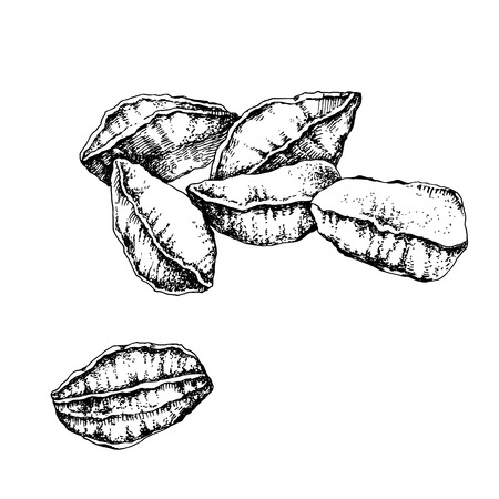Hand drawn unpeeled black and white brazil nuts