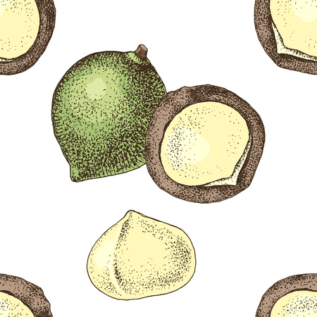 Seamless pattern with hand drawn macadamia nuts. Illustration