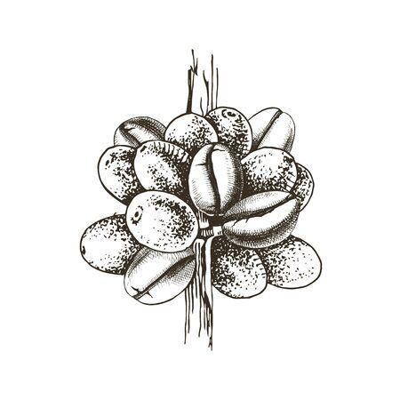 Hand drawn stylized coffee branch Stock Illustratie