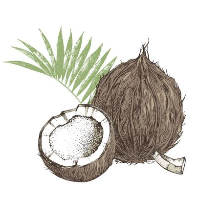 Hand drawn coconut with half and leaves