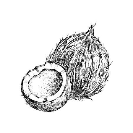 Coco dibujado a mano con la mitad Ilustración de vector