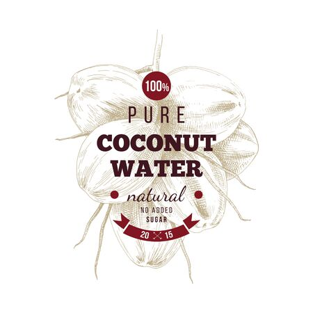 Coconut water label over hand drawn coconut bunch