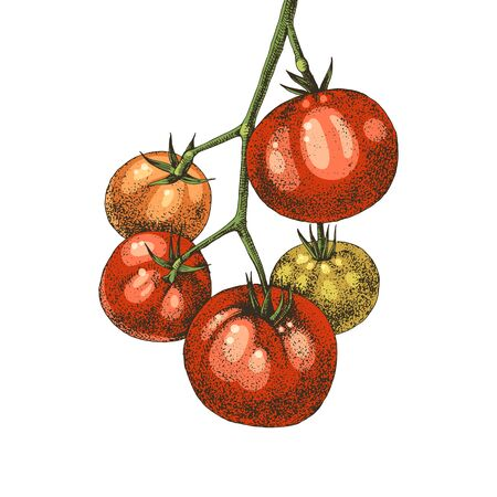 Hand drawn tomatoes branch