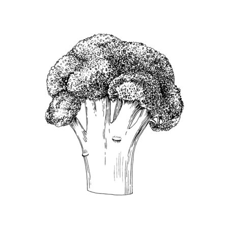 Hand drawn broccoli isolated on white