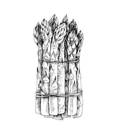 Bouquet d'asperges dessinés à la main isolé sur fond blanc
