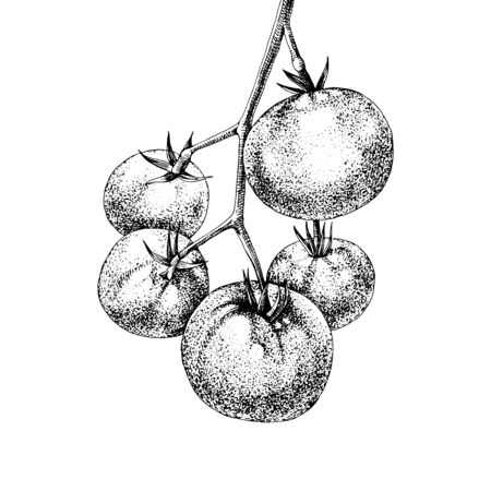 Hand drawn tomatoes branch Фото со стока - 130757705