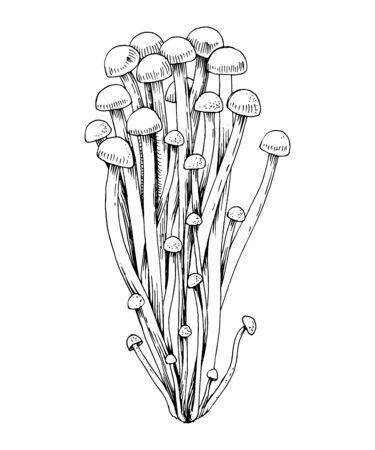 Hand drawn Enoki mushrooms