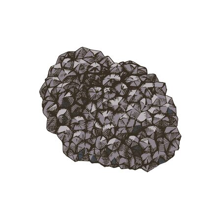 Hand drawn black truffle mushroom. Vector illustration