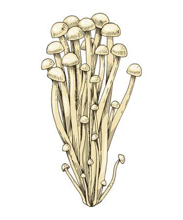 Hand drawn Enoki mushrooms . Vector illustration 일러스트