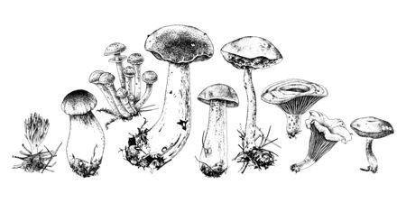 Hand drawn forest mushrooms