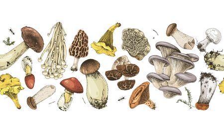 Seamless border with hand drawn edible mushrooms Vetores