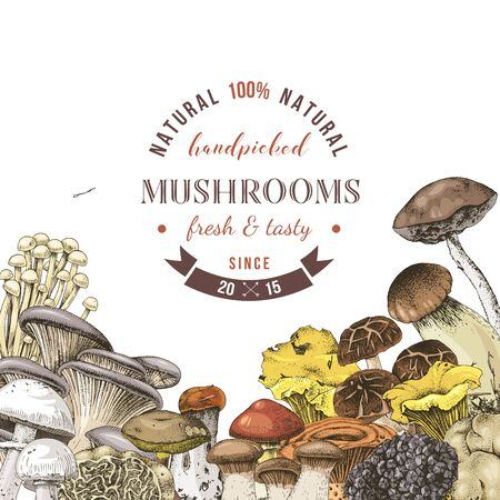 Background with hand drawn edible mushrooms 向量圖像