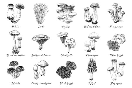 Hand drawn mushrooms collection. 15 types of edible mushrooms. Vector illustration