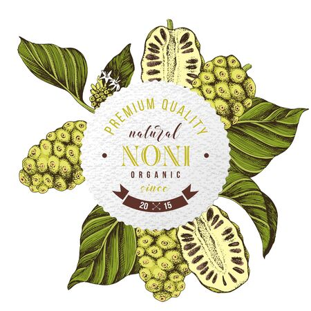 Round emblem with hand drawn noni branches. Superfood. Vector illustration in retro style Illustration