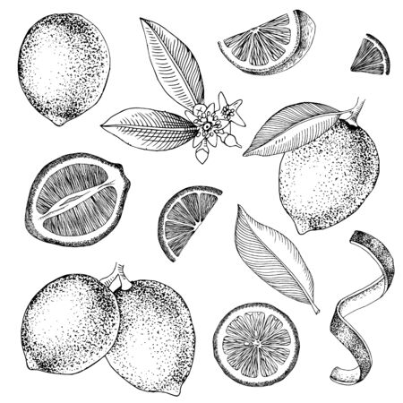 Hand drawn limes. Blooming lime branch, half of lime, lime slices, skin and leaves. Vector set in retro style