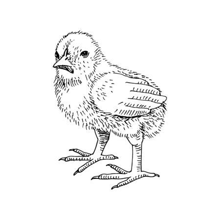 Hand drawn chicken in retro style