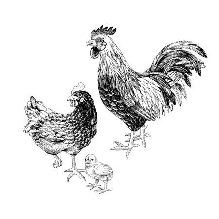Handgezeichneter Hahn, Henne und Huhn.