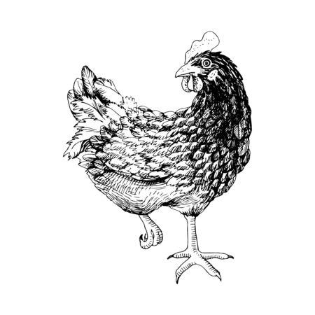 Handgezeichnetes Huhn.