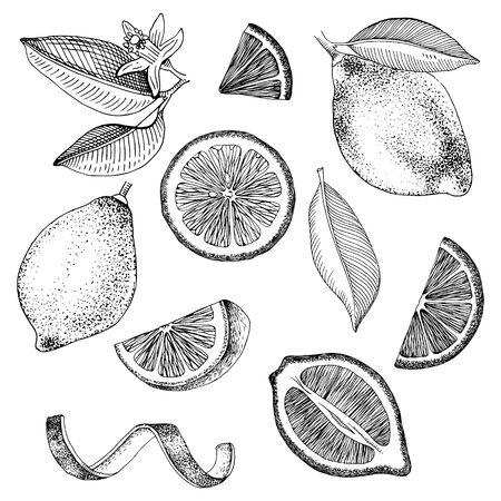 Hand drawn lemons collection - fruits, slices, half of lemon, lemon peel and leaves. Hand drawn vector illustration.