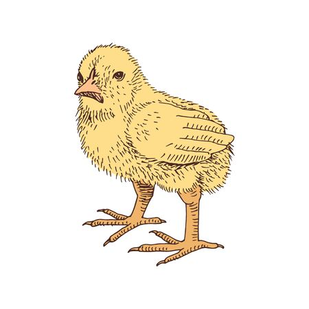 Hand drawn chicken in retro style