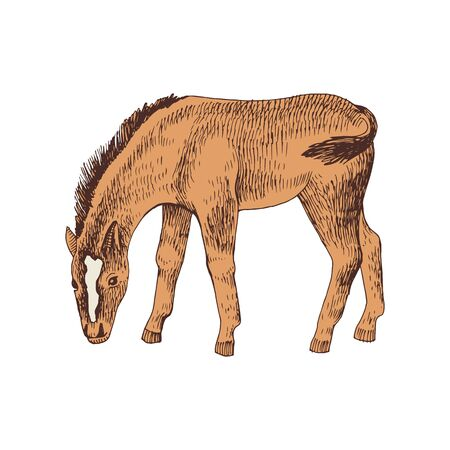 Hand drawn sketch of foal grazing