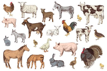 Large set of farm animals with their babies