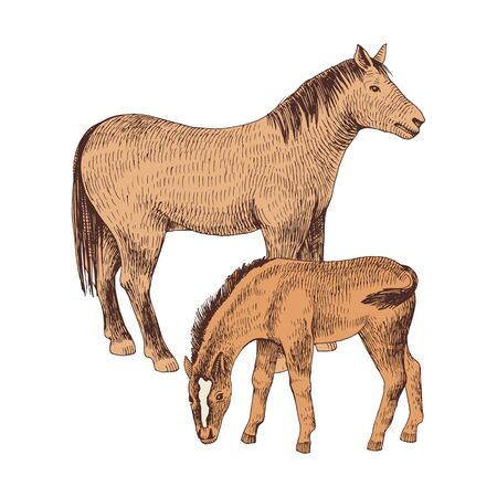 Hand drawn horse and foal. Farm animals familie