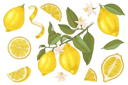 Hand drawn lemons collection. Blooming branch with ripe fruits, slices, half of lemon, lemon peel and leaves. Hand drawn vector illustration.