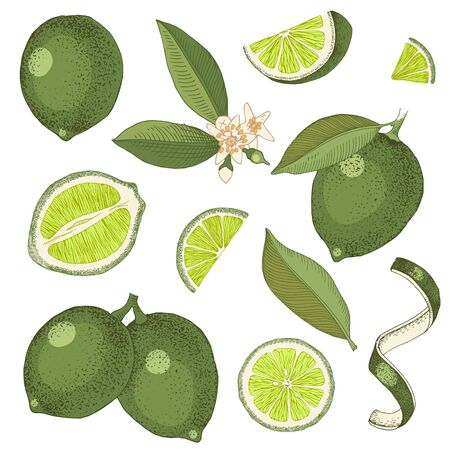Hand drawn colorful limes. Blooming lime branch, half of lime, lime slices, skin and leaves. Vector set in retro style
