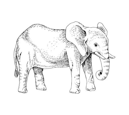Hand drawn black and white elephant
