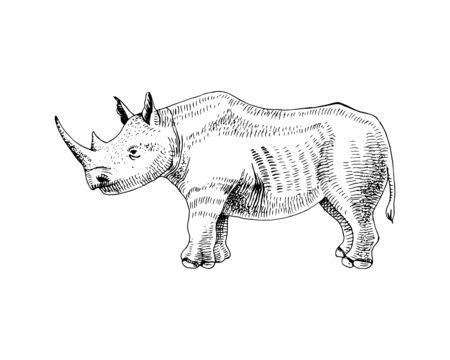 Hand drawn rhinoceros 向量圖像