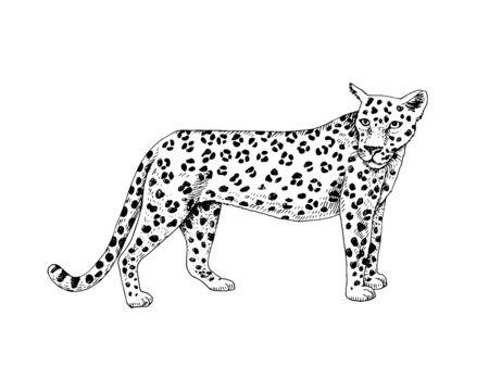 Hand drawn leopard Vektorové ilustrace
