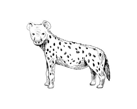 Hand drawn spotted hyena