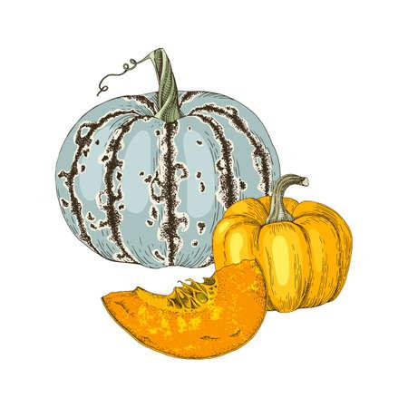 Hand drawn fall pumpkins