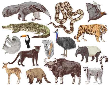Jungle animals collection