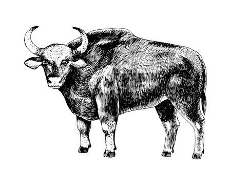 Hand drawn bull gaur isolated on white background